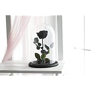 Beauty and the beast rose, Size Large, Live Forever Rose, Enchanted Rose, Rose in glass dome, Forever rose, Rose in Glass, preserved rose, preserved flower, Black rose 117