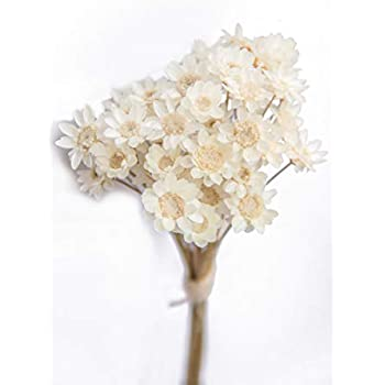 100 Stems Natural Dry Flowers Brazilian Small Star Daisy Decorative Dried Flowers Mini Daisy Chamomile Bouquet for Wedding Floral Arrangements Home Decorations (White)