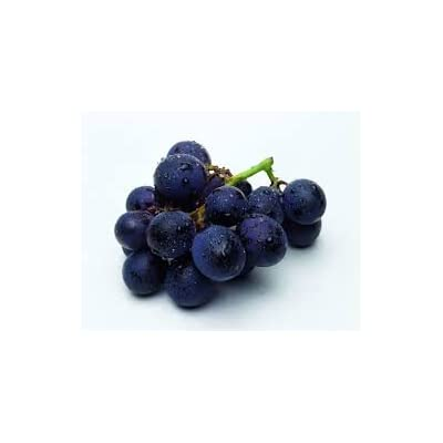 (1 Gallon) Black Spanish Grape Vine, SEEDLESS Black Grape Plant, Great for Table Grape, Juice, Jelly or Wine. Small to Medium Sized Fruit, Bluish Black in Color. : Garden & Outdoor
