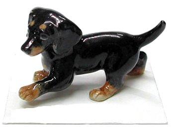 DACHSHUND Black & Tan Puppy Dog