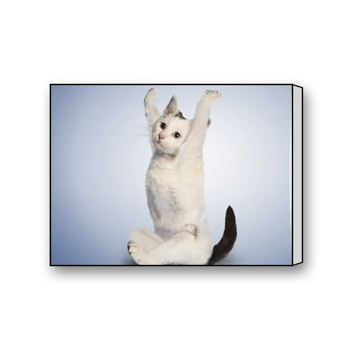 Cute Cool Kawaii Lovely Kitty Pet Cat Cartoon Pussy Mog Unique Art Pattern Decorative Painting Wood Printmaking