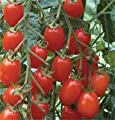 David's Red Hybrid Grape Tomato Red Grape 15 Seeds per Packet