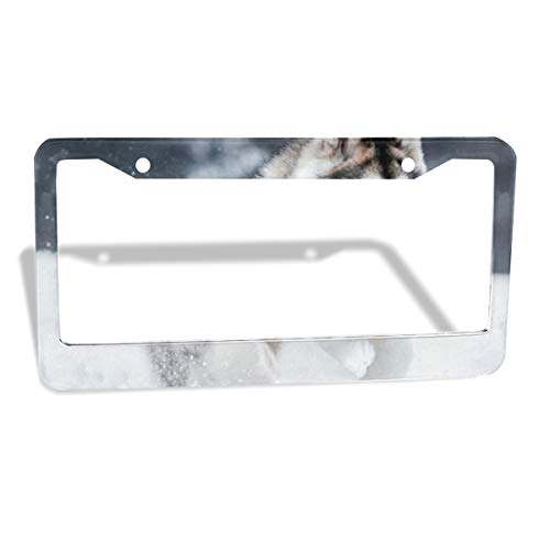 Love beautiful Alaskan Malamute Running License Plate Frame for Women/Girls, Aluminum Metal Car Custom Licenses Plate Cover for Both Front and Back License Tag 2 Holes/2 Piece 12