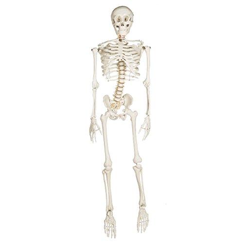 Bart Skeleton - Fourth Quality
