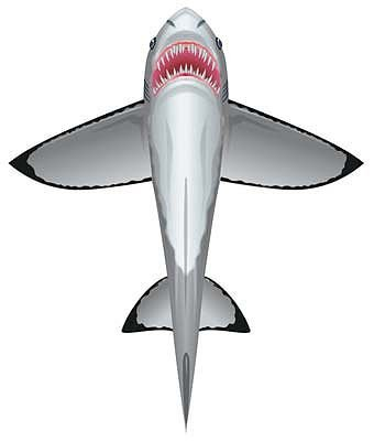 WindnSun SeaLife Great White Shark Nylon Kite-60 Inches Tall by BRAIN STORM KITES by Brainstorm Products LLC