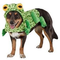 top paw frog dog halloween costume xxl