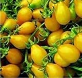 Hinterland Trading Yellow Pear Mini Heirloom Tomato 50 Fresh Seeds