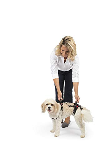 PetSafe Solvit CareLift Full-Body Lifting Harness, (Best Solvit Harness For Dogs)