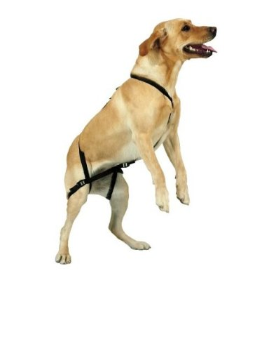 Anti Jump Dog Harness Reviews