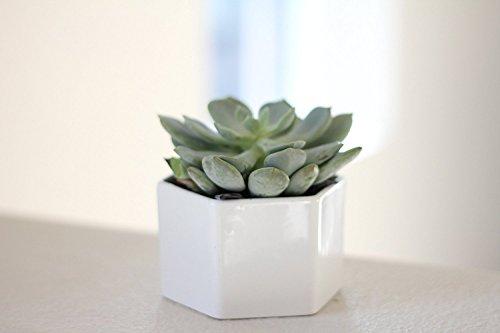 Maikai Products Hexagon Succulent Pot. White Ceramic. Modern, Minimalist and Cute. PLA0002 - Hexagon Products
