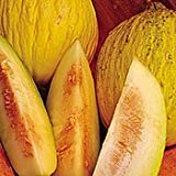 Organic Sungold Casaba Melon 35 Seeds - Sweet and Juicy