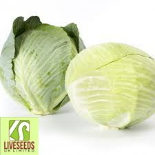 (Liveseeds - White Cabbage - Kalorama RZ -30 Finest seeds)