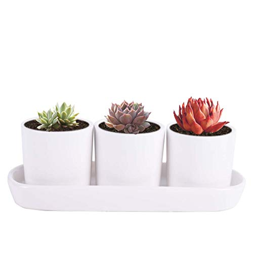 Vencer Contemporary Design Ceramic Succulent Planters – Flower Pots Handled Display Tray,Office Desktop Potted Stand,Home Office Decor Accent,Set of 3,White,VF-0125W