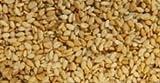 Natural Sesame Seed Butter(Tahini) - 39 LBS