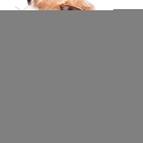 Dog Clothes Caribou Dog Sweatshirts Sweatshirts Beautiful Art 100% Polyester Fiber Dog Coats Dog Jumpers