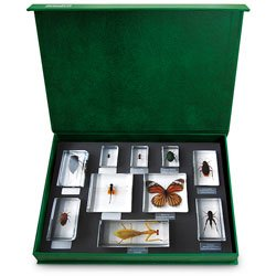 Nasco Insect Specimen Blocks - Insect Orders - SB48191