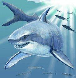 Shark Decorative Ceramic Wall Art Tile 4x4 (Art 4x4 Tile)