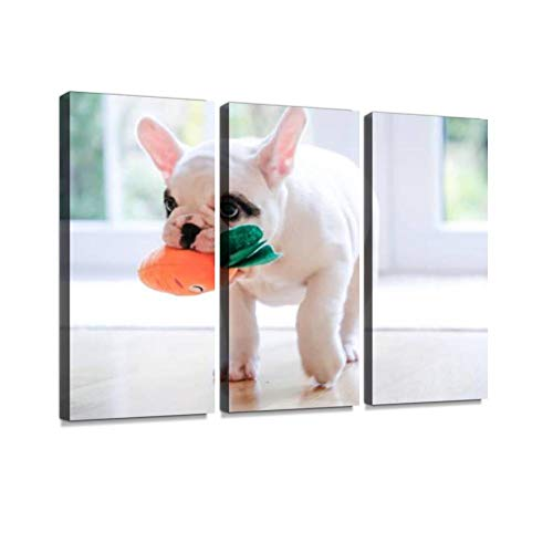 Pied French Bulldog puppy walking with a carrot toy in her mouth Wall Artwork Exclusive Photography Vintage Abstract Paintings Print on Canvas Home Decor Wall Art 3 Panels Framed Ready to Hang ()
