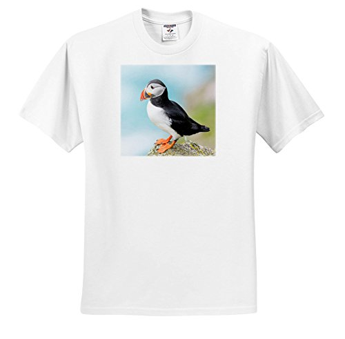 Danita Delimont - Puffins - Atlantic Puffin Looks Out From Rocky Perch. Scotland, Shetland Islands - T-Shirts - Youth T-Shirt Small(6-8) (TS_257925_12) (Atlantic Puffins Perch)