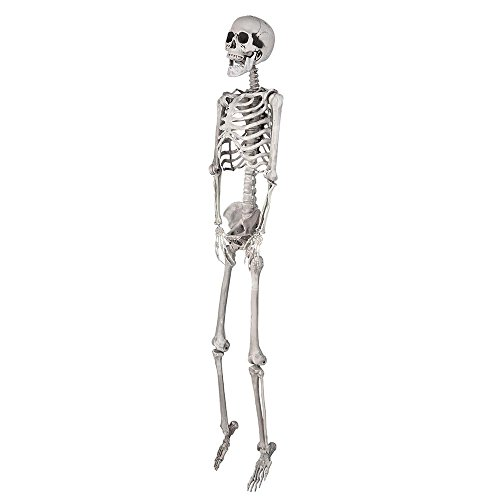 AW 5ft Full Body Skeleton Props with Movable Joints for Halloween Party -