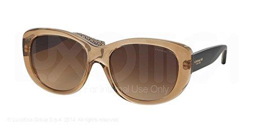 Coach HC8083 DARCY Sunglasses 521613