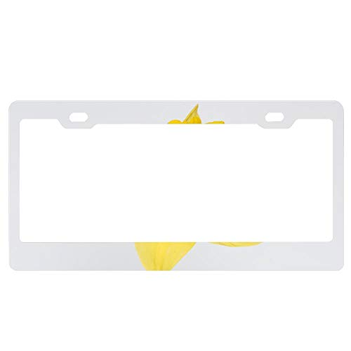 Customized Personalized Luxury Premium Lovely Daffodil Flower Decorative Car License Plate Cover Frame Shields,Standard Non Anti-Theft Model(6