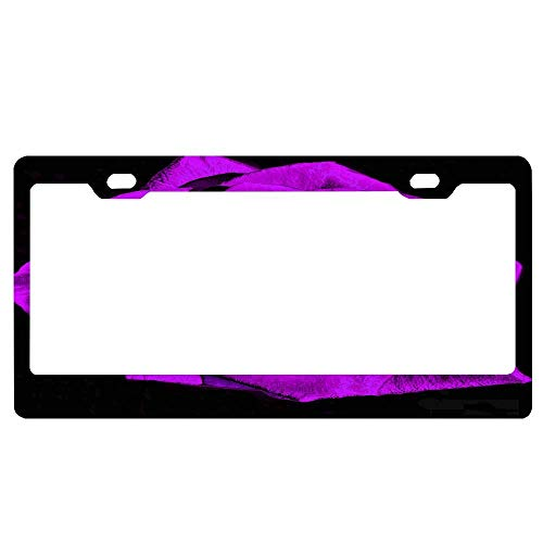ASLGlicenseplateframeFG Color Muse Majestic Rose Violet 22x22 Art Deco Design Personalised License Plate Classic Customized Pattern Metal License Plates Auto Car Tag Decorative Front Plate 12