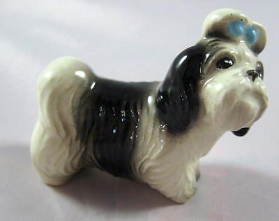 SHIH TZU Dog 'Mandy' Looks At You
