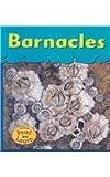 Barnacles, Lola M. Schaefer, 1588107213