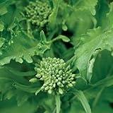 Hinterland Trading Organic Broccoli Raab - 100 Seeds