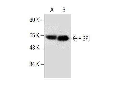 BPI (D-3) ()