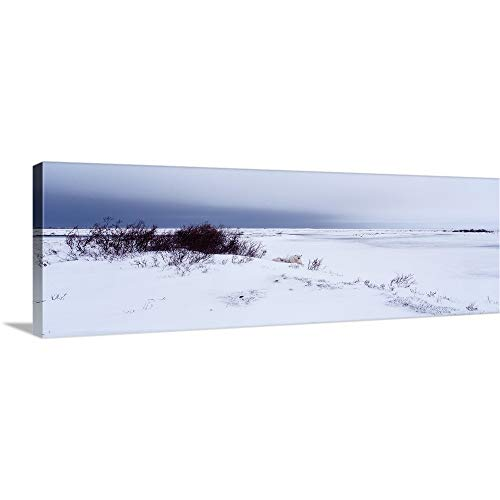 Premium Thick-Wrap Canvas Wall Art Print Entitled Canada, Manitoba, View of Resting Polar Bears in The Snow ()