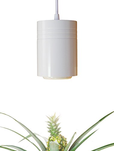 Nasa Led Light Plant in US - 7