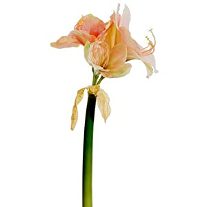 "20"" Amaryllis Spray Two Tone Salmon (pack of 6) 3"