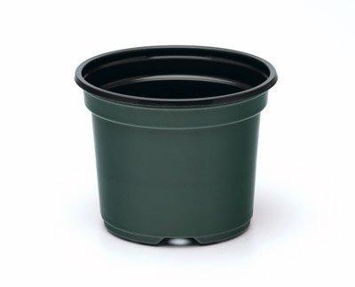 Green Azalea - 3