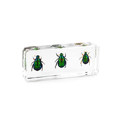 QTMY Biology Science World Collection of Real Insect for sale  Delivered anywhere in Canada