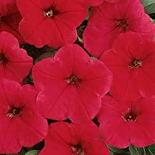 Petunia-Spreading Easy Wave Red 100 seeds