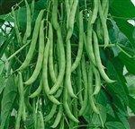 Bulk Organic Kentucky Wonder Pole Beans (1/2 Lb)