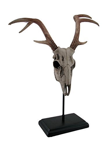 Resin Statues Buck Deer Skull Statue On Black Museum Mount 18 X 21 X 11 Inches White (Mount Museum)