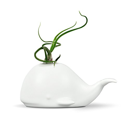 Fred 5229116 Fancy Ceramic Mini Air Plant/Succulent Holder, regular, Whale