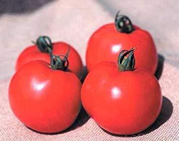 VISA STORE Better Boy Vfn Tomato Seeds