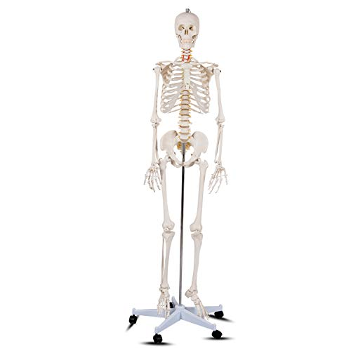 """Giantex 70.8"""" Life Size Human Skeleton Model Medical Anatomical with Rolling Stand, Removable and Movable Parts, Real Human Skeleton Includes Base, Skeleton Poster and Dust Cover"""