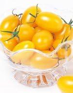 ミニトマト種子 イエローアイコ 1000粒 (サカタのタネ)