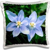 (Michael Scheufler - Flowers - USA, Kansas, Prairie Flower. - 16x16 inch Pillow)