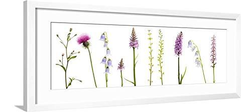 ArtEdge Meadow Flowers, Fleabane Thistle, Bearded Bellfower, Common Spotted Orchid, Twayblade, Austria Wall Art Framed Print, 12x36, Soft White ()