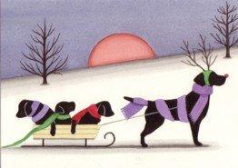 Amazon.com: Christmas cards: Sled ride with black labrador (lab ...