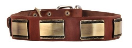 Dean and Tyler  BRASS STYLE , Leather Dog Collar with Beautiful Brass Plates Brown Size 51cm by 4cm Fits Neck 46cm to 56cm