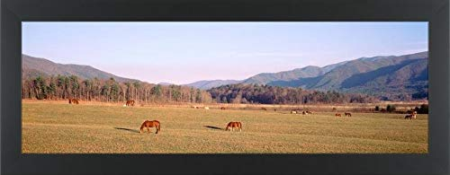 Easy Art Prints Panoramic Images's 'USA, Tennessee, Cades Cove, Great Smoky Mountains National Park, Horses grazing in The Field' Premium Framed Canvas Art - 30
