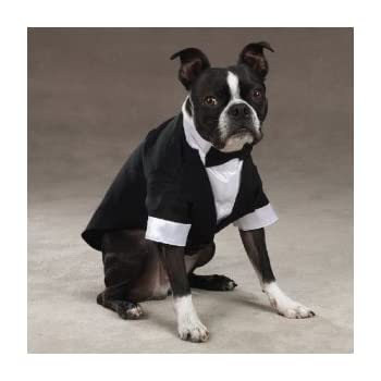 Casual Canine Dog Tuxedo - Dog Costume - Small  sc 1 st  Amazon.com & Amazon.com : Casual Canine Dog Tuxedo - Dog Costume - Small : Pet ...