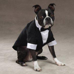 Medium – Top Dog Tuxedo – Dog Costume – Dog Wedding Suite, My Pet Supplies